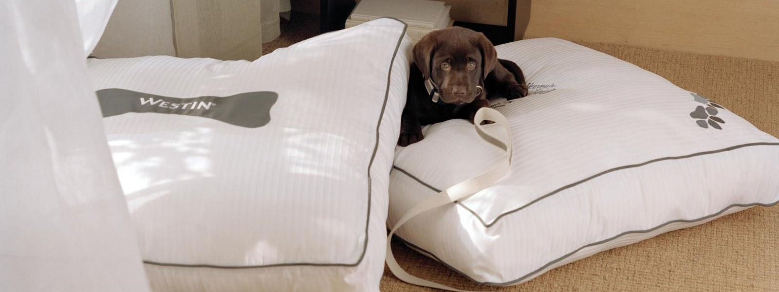 Pet Friendly Hotels in Mammoth Lakes, CA - dog